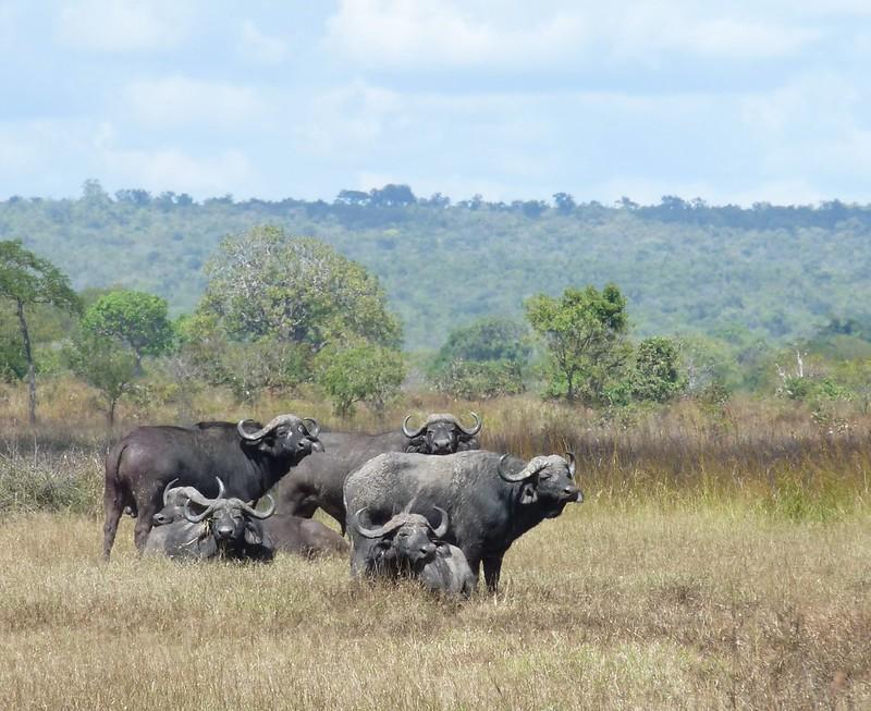 3 day mikumi safari