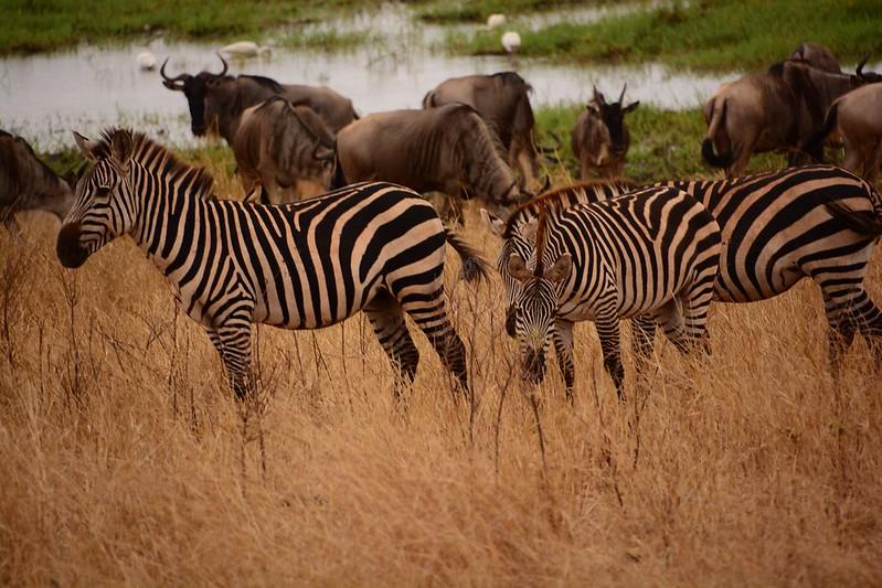 African safari luxury cost