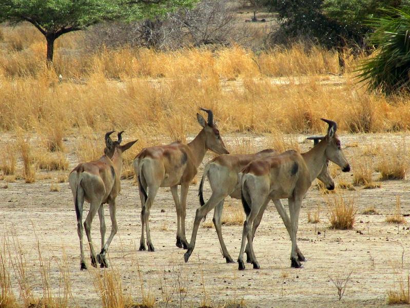selous luxury safari