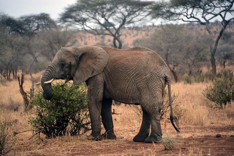 Tanzania wildlife luxury safaris