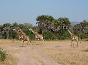 Selous Game Reserve Tanzania, A Safari Guide