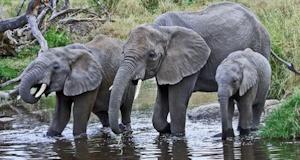 Tanzania-Elephants