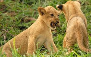 Selous-wildlife