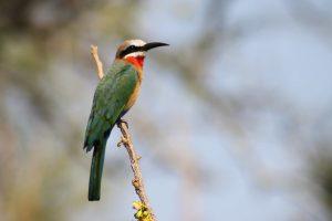 birdwatching in tanzania