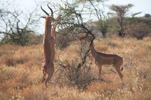 10 day safari tanzania
