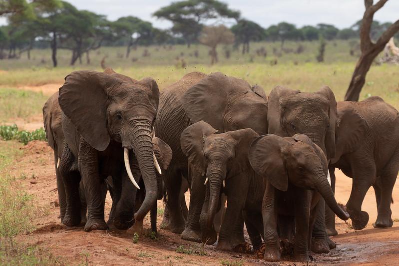 3 day safari tanzania