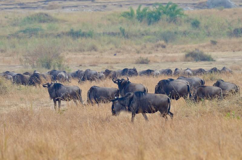 5 day safari