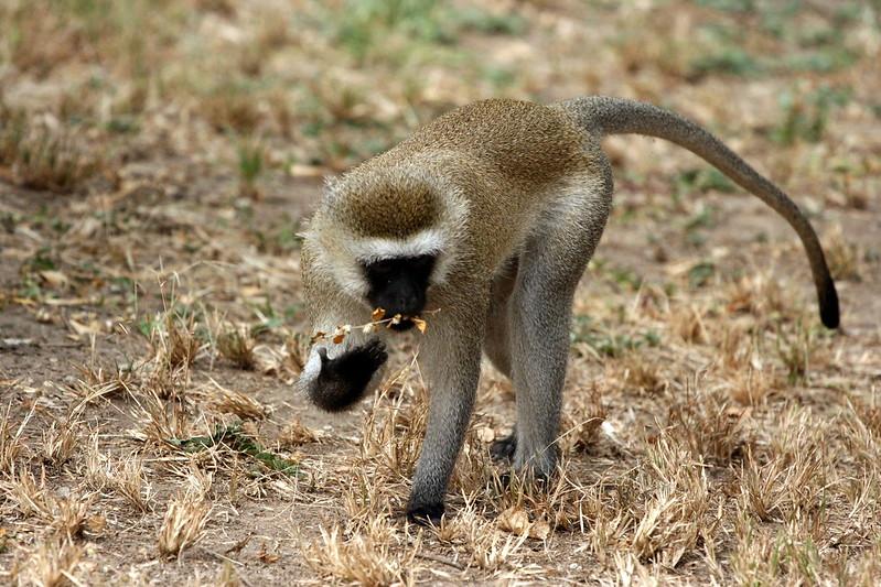 9 day safari tanzania