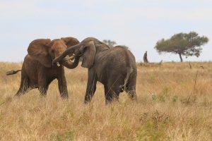 9 day tanzania safari