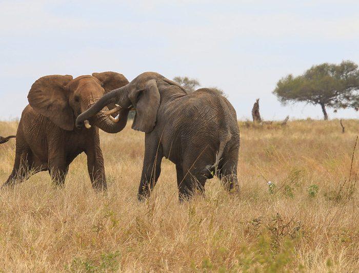 9 days Safari Tanzania