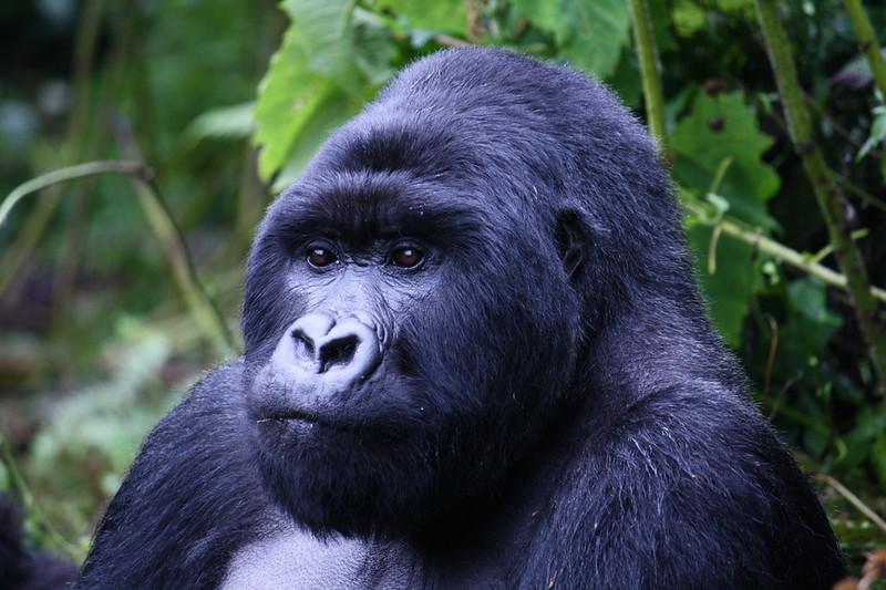 Kenya Tanzania Uganda luxury African safari