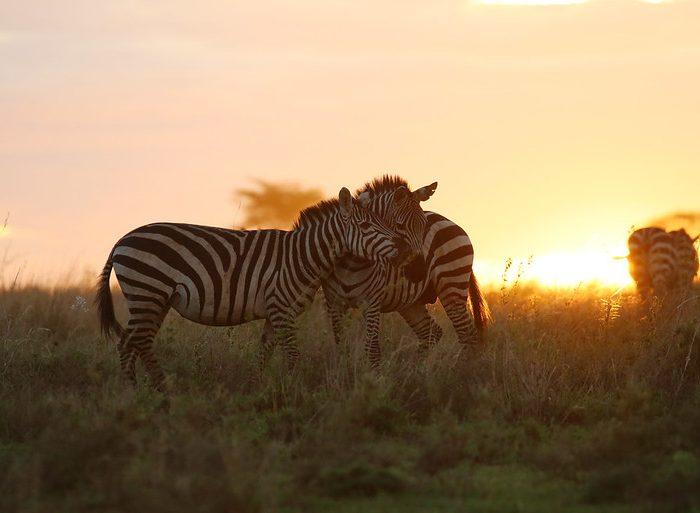 6 day Safari Tanzania