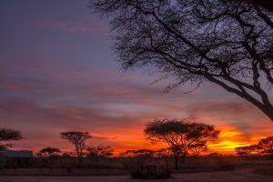 booking safari tanzania