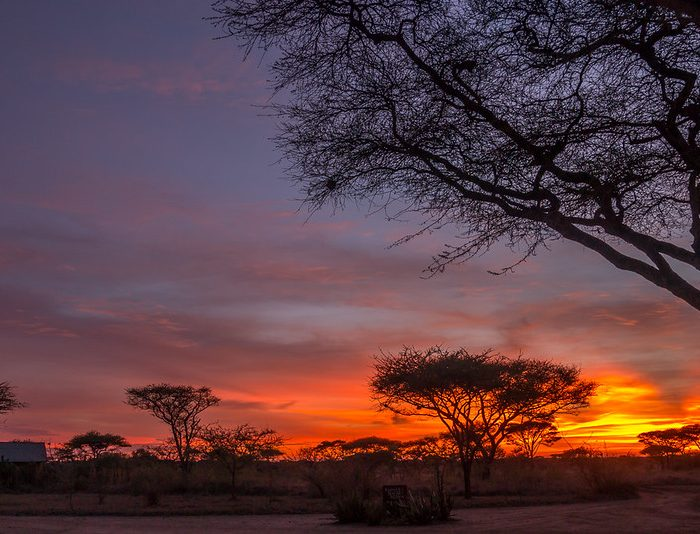 How To Book A Safari in Tanzania, 10 Steps in Planning Your Visit