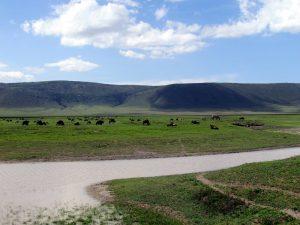 ngorongoro crater safari