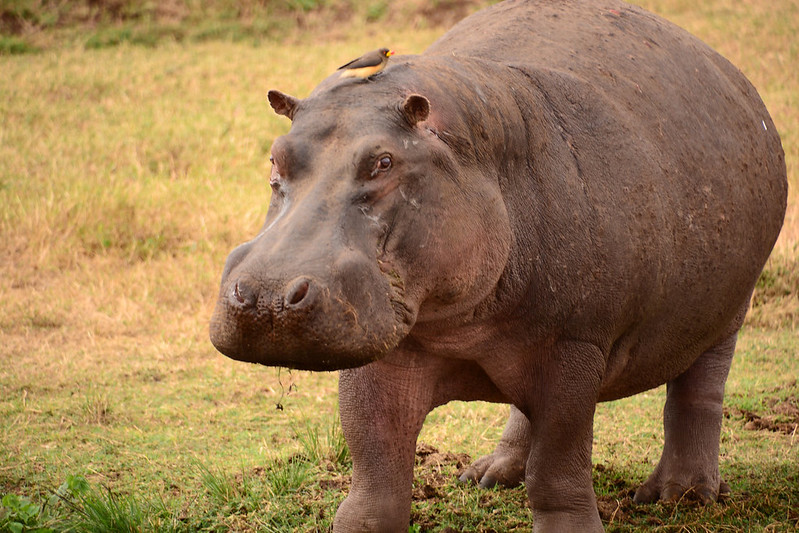 rhino safari tanzania