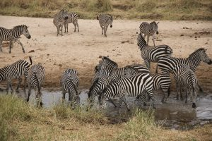 tanzania photo safaris
