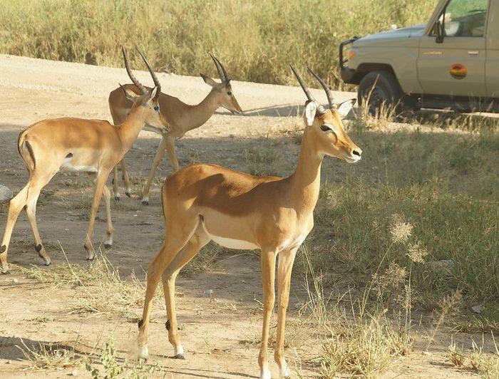 Best 8 days Tanzania Safaris