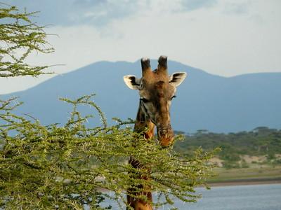 ndutu safaris