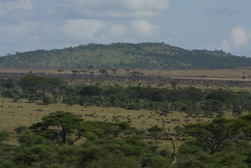 northern serengeti great migration